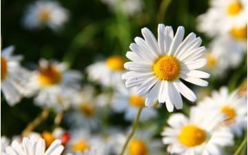 Allergie: consigli utili